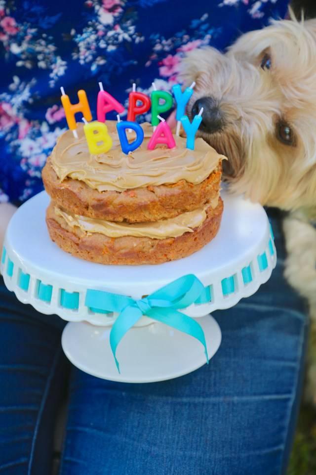 Как испечь торт для собак? рецепт | dogkind.ru