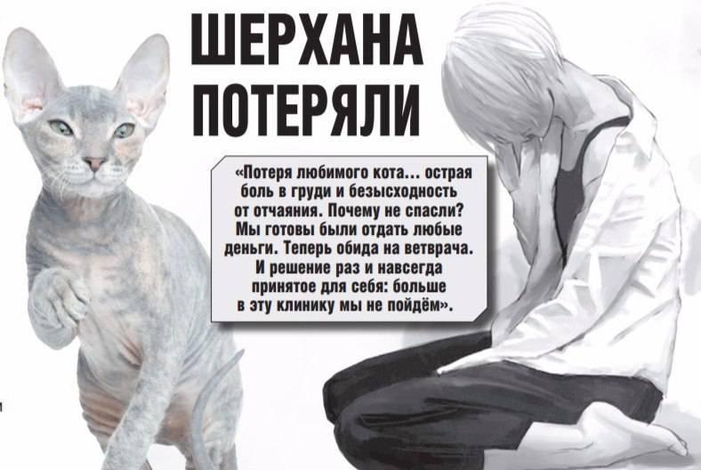 Как пережить смерть кота - советы и помощь психолога