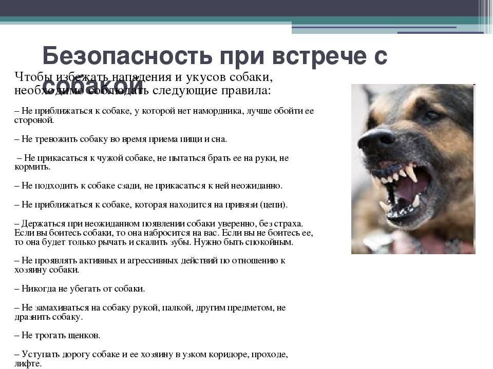 Какая ответственность, если моя собака покусала другую собаку?
