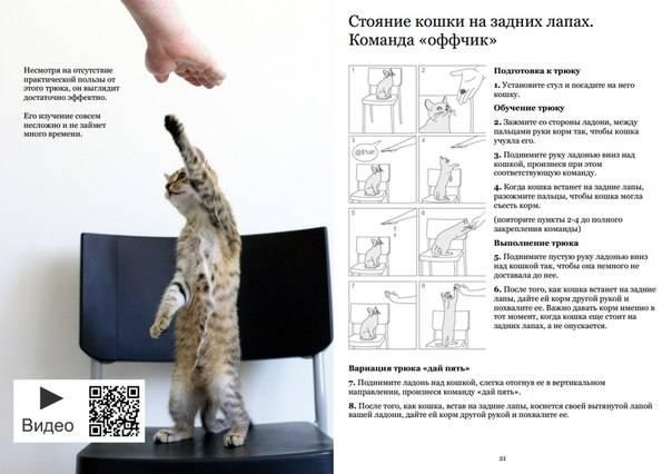 Как дрессировать кошку в домашних условиях: уроки для начинающих