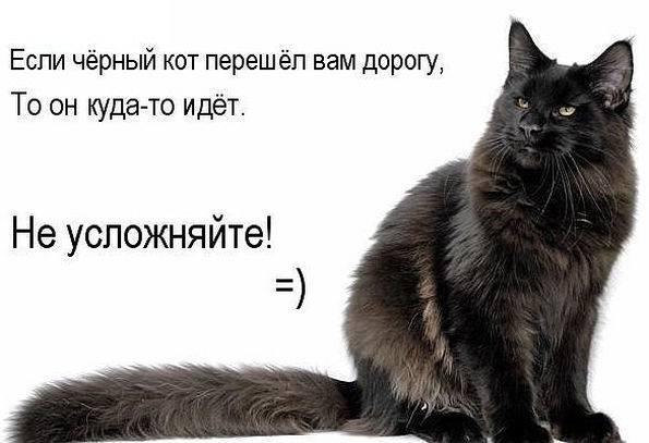 Черная кошка в доме – хорошо это или плохо, стоит ли заводить, что она приносит: приметы и суеверия