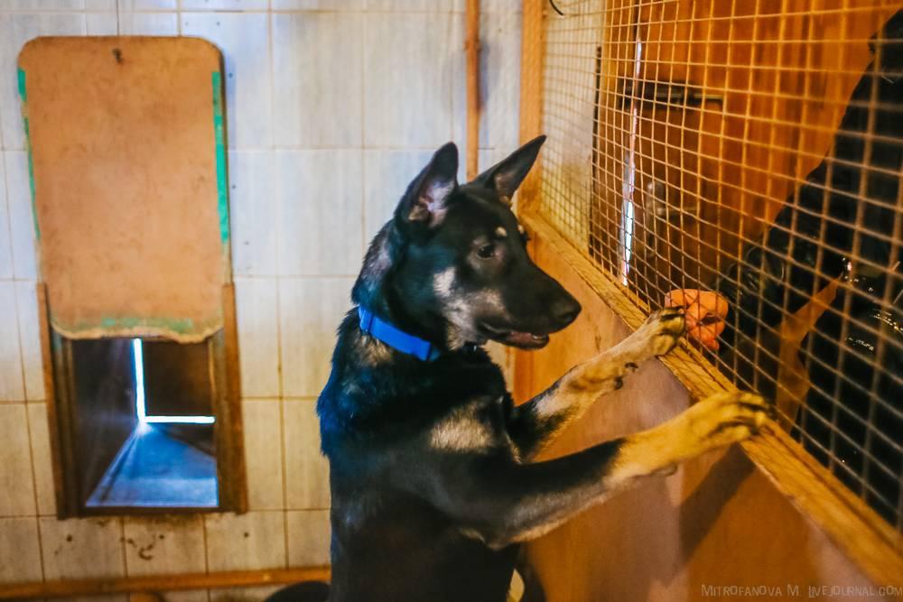 Куда отдать собаку навсегда: как сдать в приют
