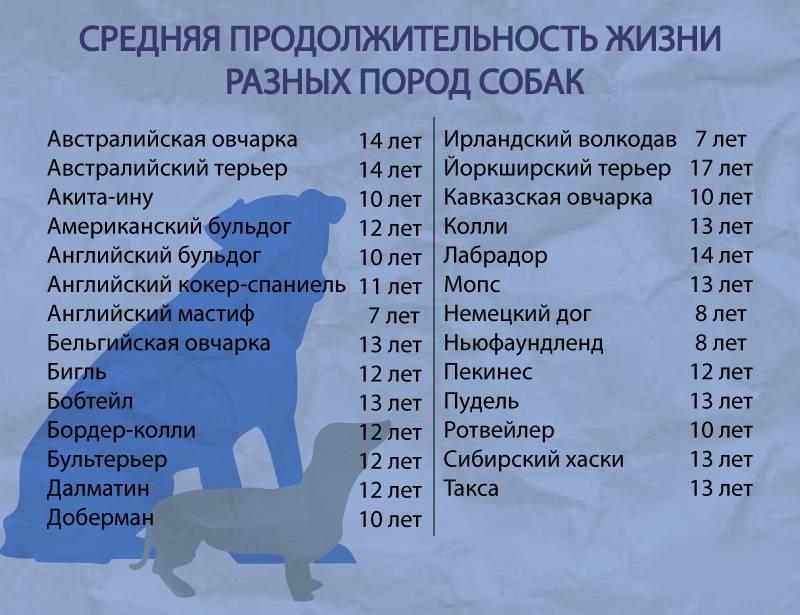 Сколько лет живут йорки? продолжительность жизни, уход, почему умирают йорки. - petstime.ru