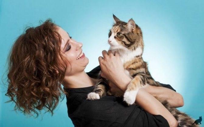 Как приручить кошку к рукам: уличную или взрослую