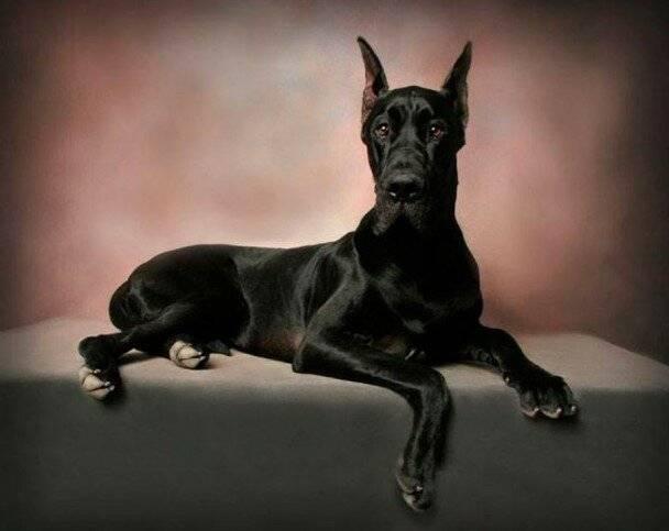 Топ-5 универсальных пород собак