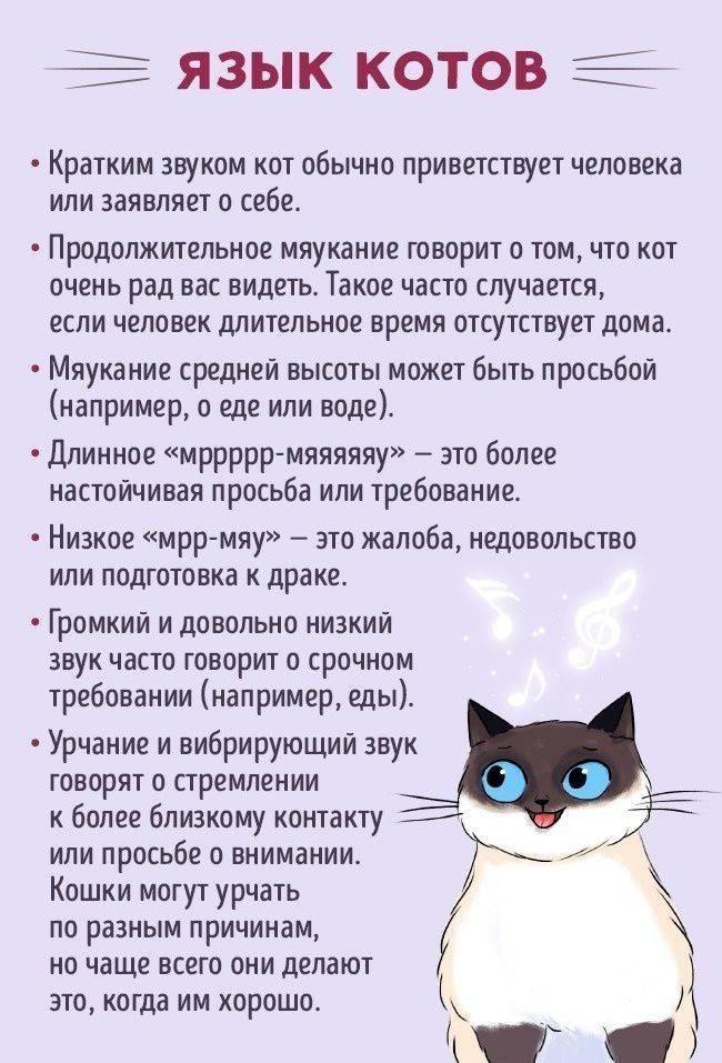 Почему коты и кошки виляют хвостом: что это значит