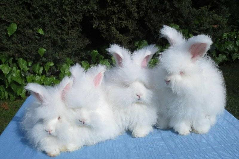 Декоративные кролики (62 фото): уход и содержание в домашних условиях. как ухаживать за маленькими крольчатами? отзывы владельцев