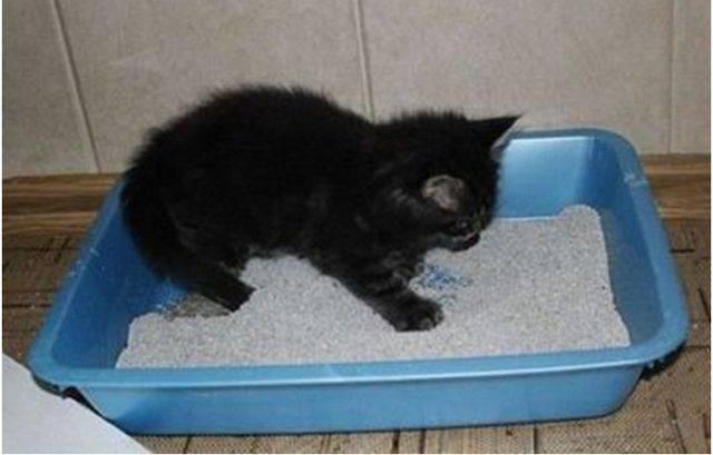 Котенок какает с кровью: причины и лечение | ходит в туалет