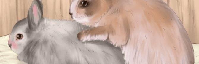 Почему крольчиха не подпускает крола во время охоты?