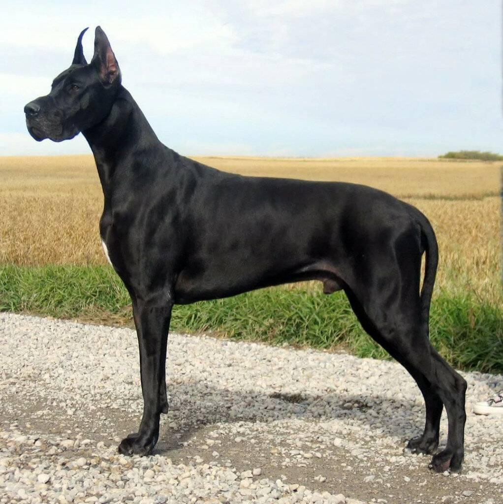 25 популярных собак средних размеров   hidogs.ru