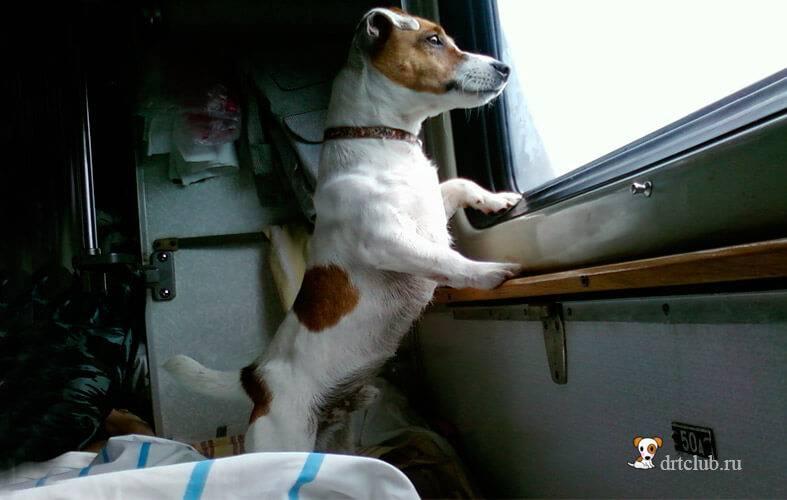Как перевезти собаку в поезде? новые правила ржд о перевозке животных