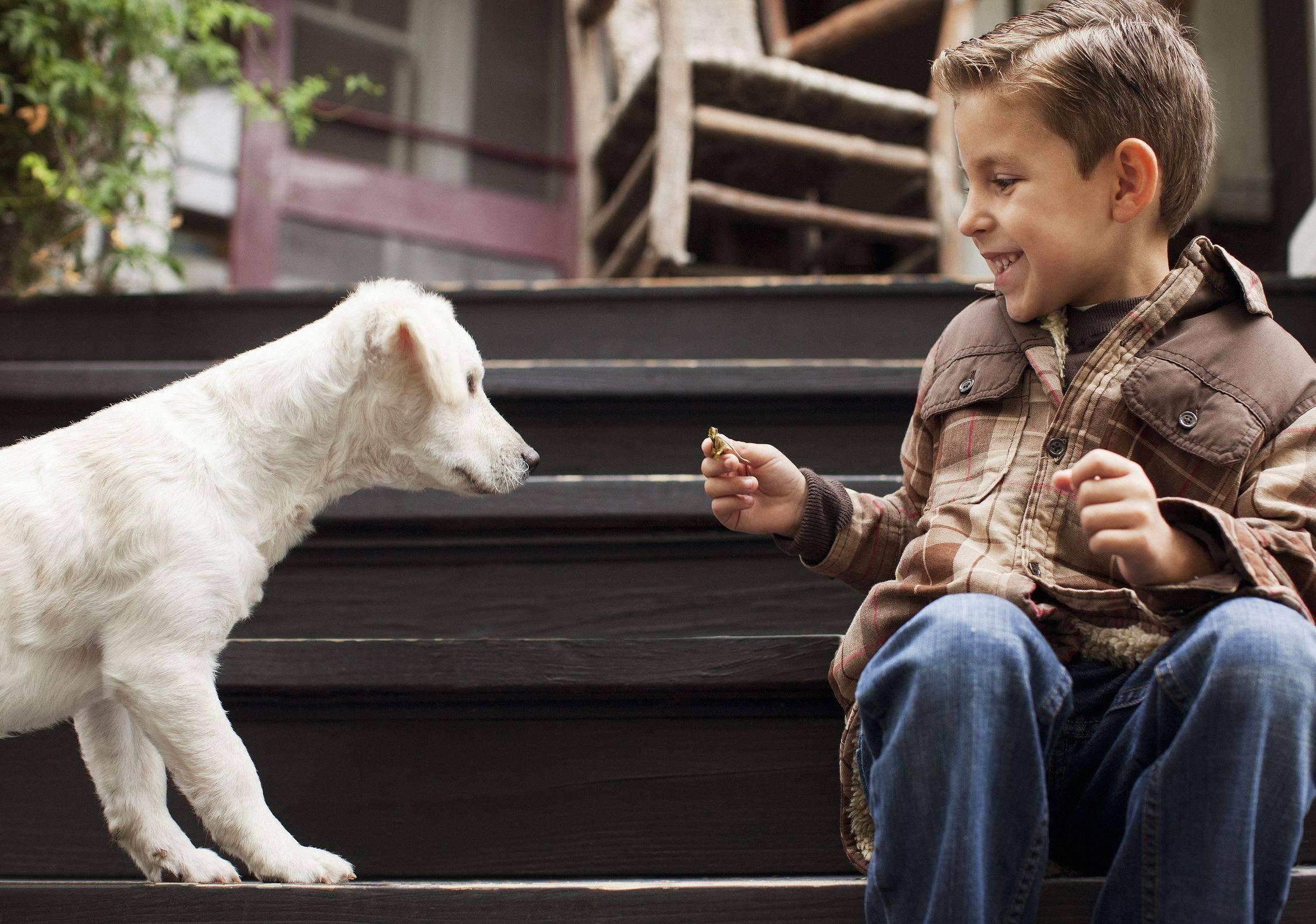 Как без конфликтов и обид научить щенка не бояться гулять на улице