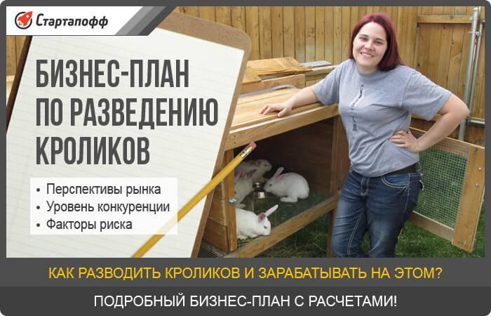 Разведение кошек как бизнес: отзывы о заработке