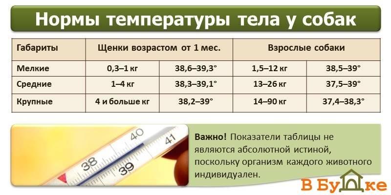 Нормальная температура у собак: отчего зависит, как измерить, какая температура у собак должна быть в норме