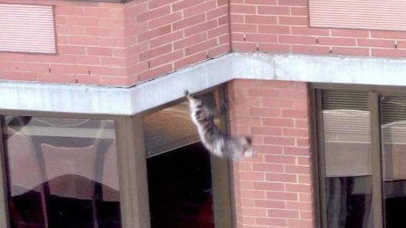 Кошка упала с высоты  первая помощь и профилактика