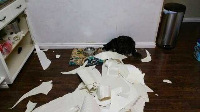 Как отучить кошку драть обои и какие обои кошки не царапают, видео