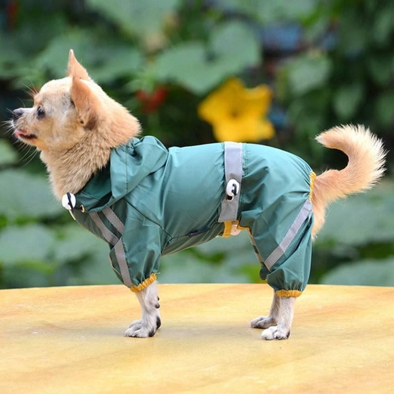 Одежда для собак: разновидности и особенности выбора