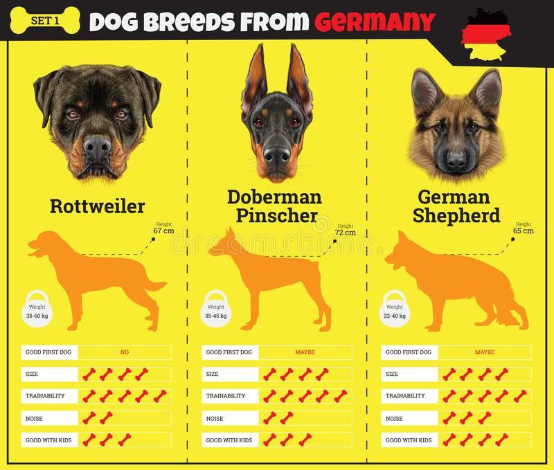 Какая порода собак мне больше подходит? тест