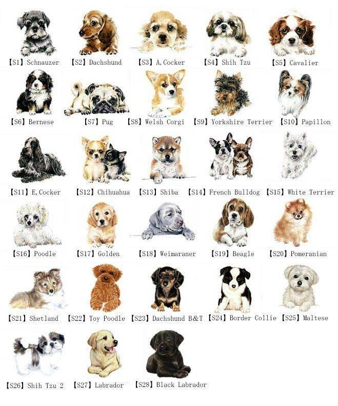 Клички для бойцовских собак