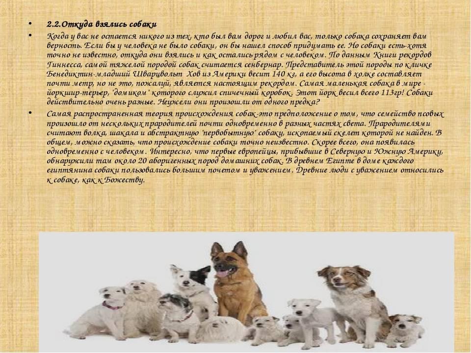 Все о собаках. происхождение. интересные факты. (фото) – соседки