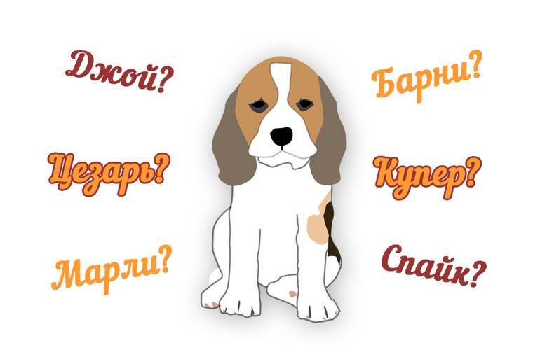 Современные имена для собак, клички щенков мальчиков и девочек.