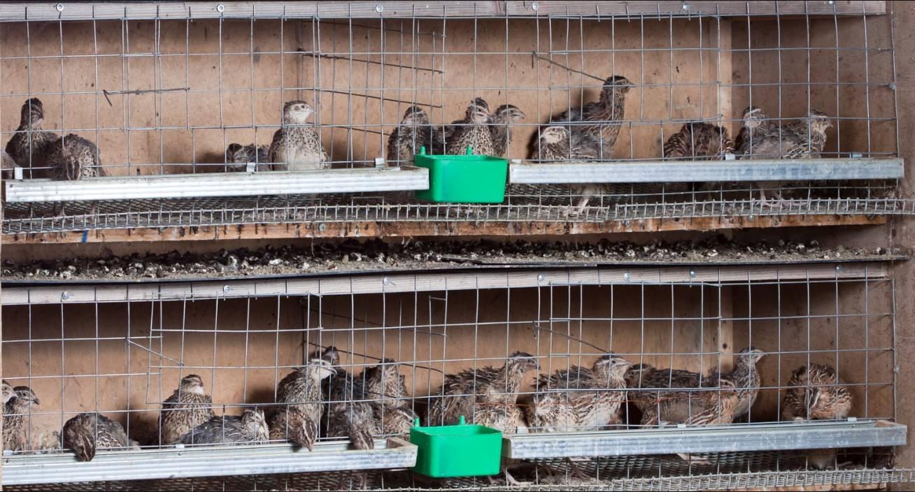 Разведение животных в домашних условиях: лучшие бизнес идеи