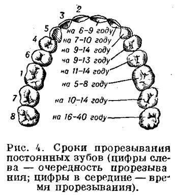 Когда у корги меняются зубы. смена зубов у щенков: схема от начала и до конца. зубы у щенков, молочные зубы у собак - новая медицина