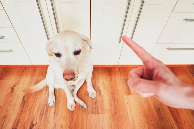 Способы наказания собаки за проступки