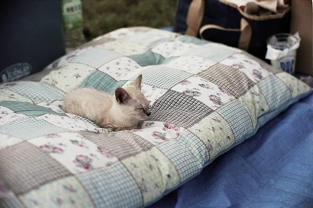 Почему кошка гадит на постель: что делать, как отучить почему кошка гадит на постель: что делать, как отучить
