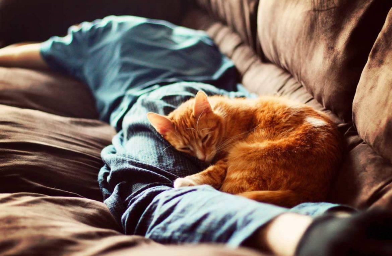 Почему кошка спит в ногах человека: рациональные и иррациональные объяснения кошачьей привычки, стоит ли беспокоиться, если кот ложится в ноги?
