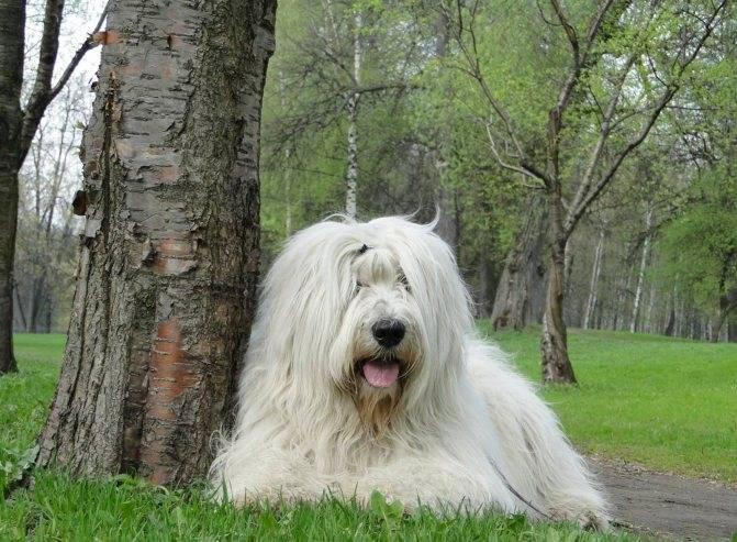 Обзор самых лучших сторожевых пород собак для охраны частного дома