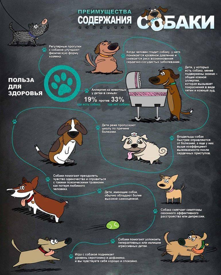 Той-терьер: уход и содержание собаки, как ухаживать за русским питомцем, когда происходит смена зубов и какие необходимы прививки
