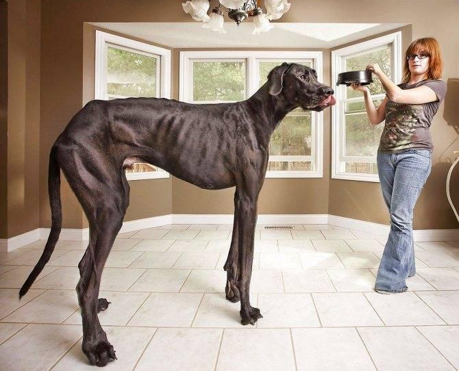 Большие породы собак: название пород и их краткое описание
