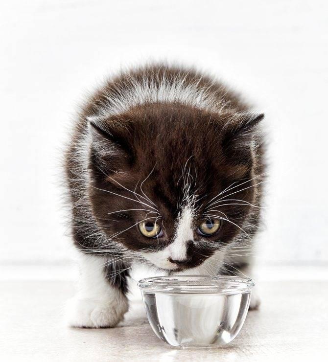 Кошка мало пьет или не пьет вообще - симптомы, лечение, препараты, причины появления | наши лучшие друзья