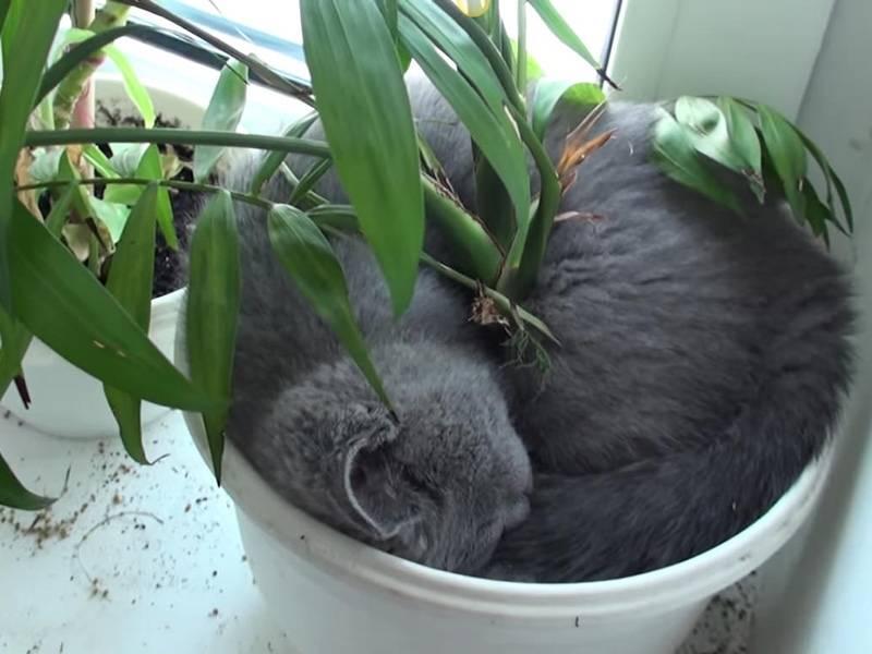 Как отучить кошку лазить в цветочные горшки, копать в них землю и гадить в цветы?