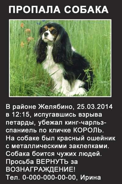Как пережить смерть собаки: рекомендации психолога, личный опыт