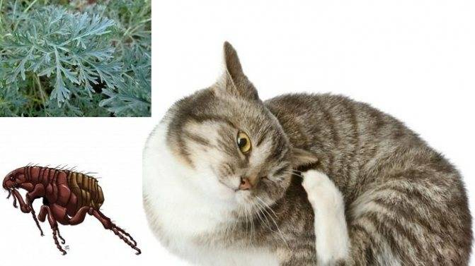 Как вывести блох у кошек народными средствами? 17 средств эффективных средств и способов вывести блох у кошки без химикатов - автор екатерина данилова - журнал женское мнение