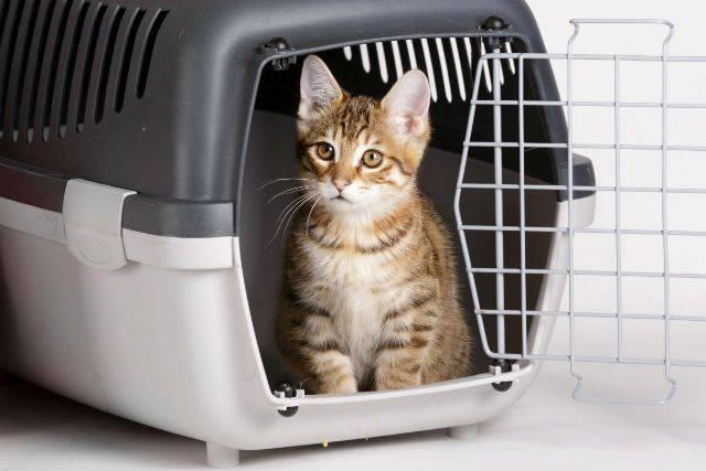Есть ли штраф за неправильную перевозку животных в машине?