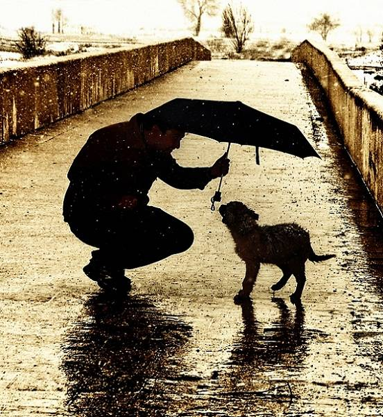 Поступки хозяев, из-за которых собаки могут грустить и расстраиваться