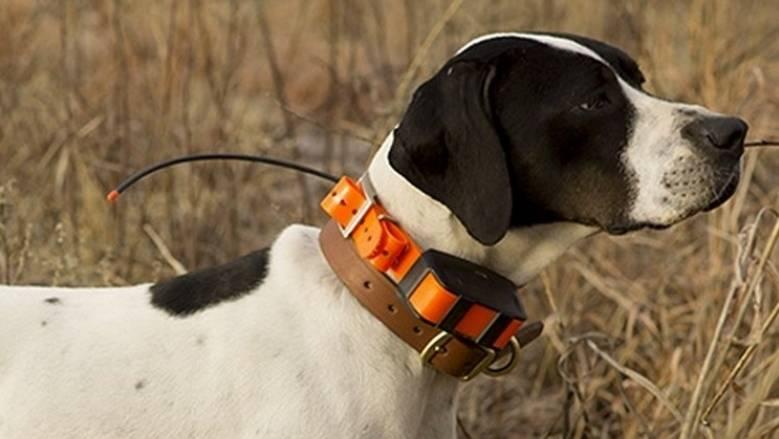 12 лучших ошейников для собак: для щенков, дрессуры, охоты, от блох
