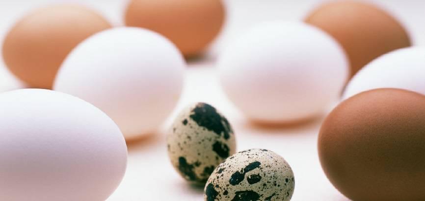 Можно ли давать сырое яйцо щенку. можно ли давать яйца собаке (сырые и варенные). сырые или вареные