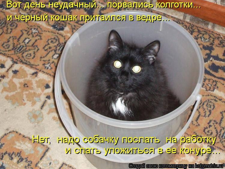 Хорошо ли держать кошку в доме