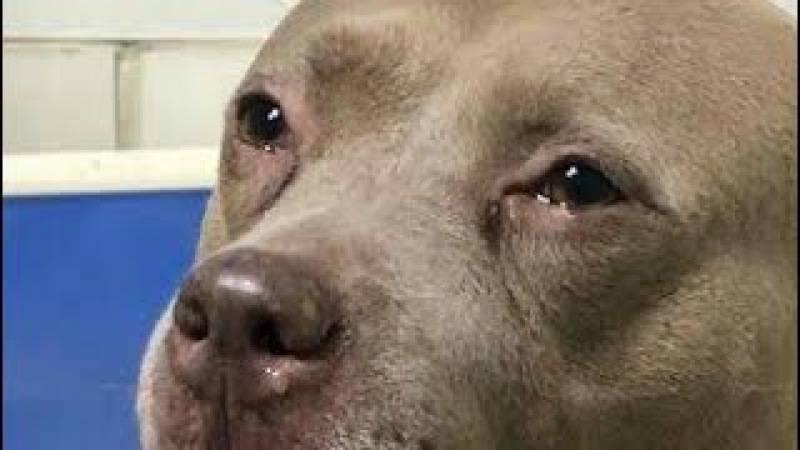 От чего воет собака: 8 причин нежелательного поведения, способы отучения животного от привычки, самые молчаливые породы собак
