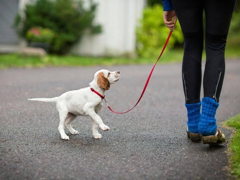 Обзор поводков-рулеток для собак, их эксплуатация и выбор по весу питомца