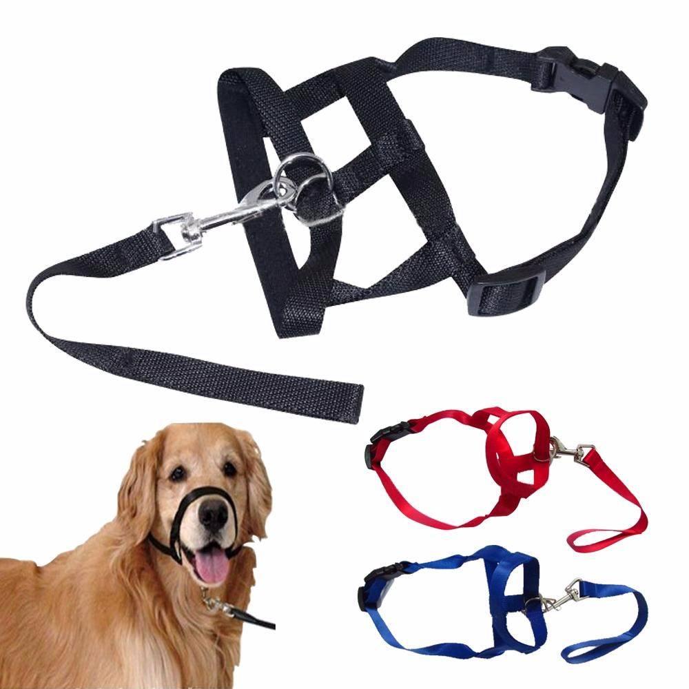 Плюсы и минусы электроошейника для собак — как выбрать ошейник