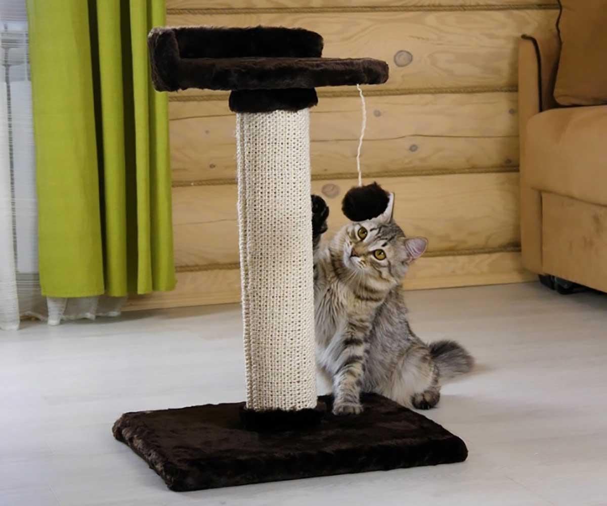 Как приучить котенка к лотку: ? 5 способов, советы и рекомендации