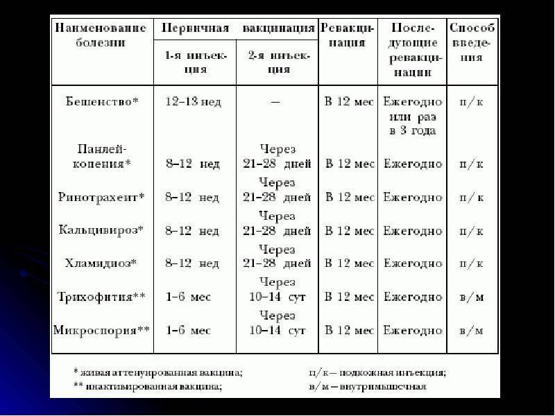 Вакцинация собак: график прививок