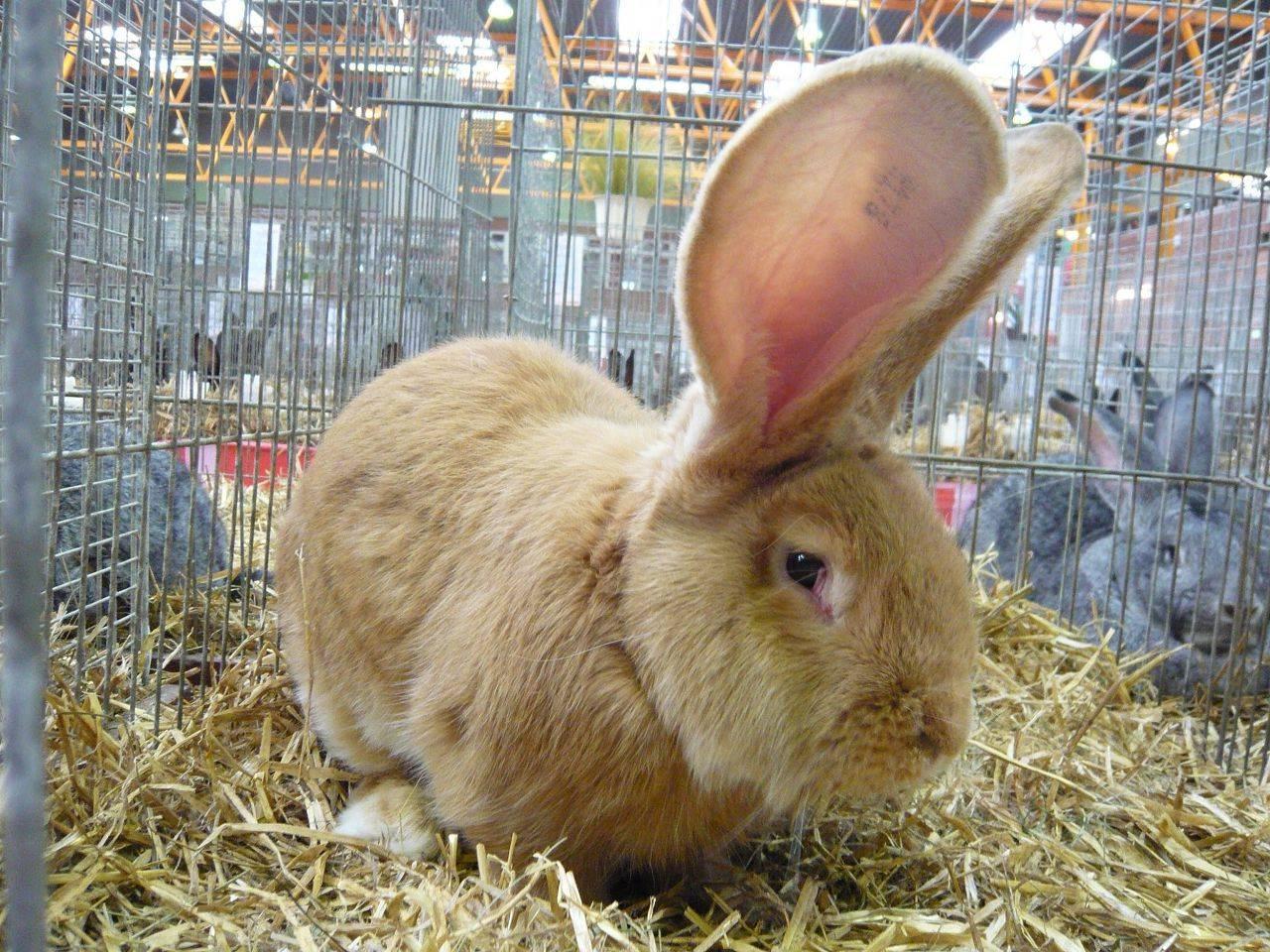 Породы кроликов: какие виды лучше разводить в домашних условиях