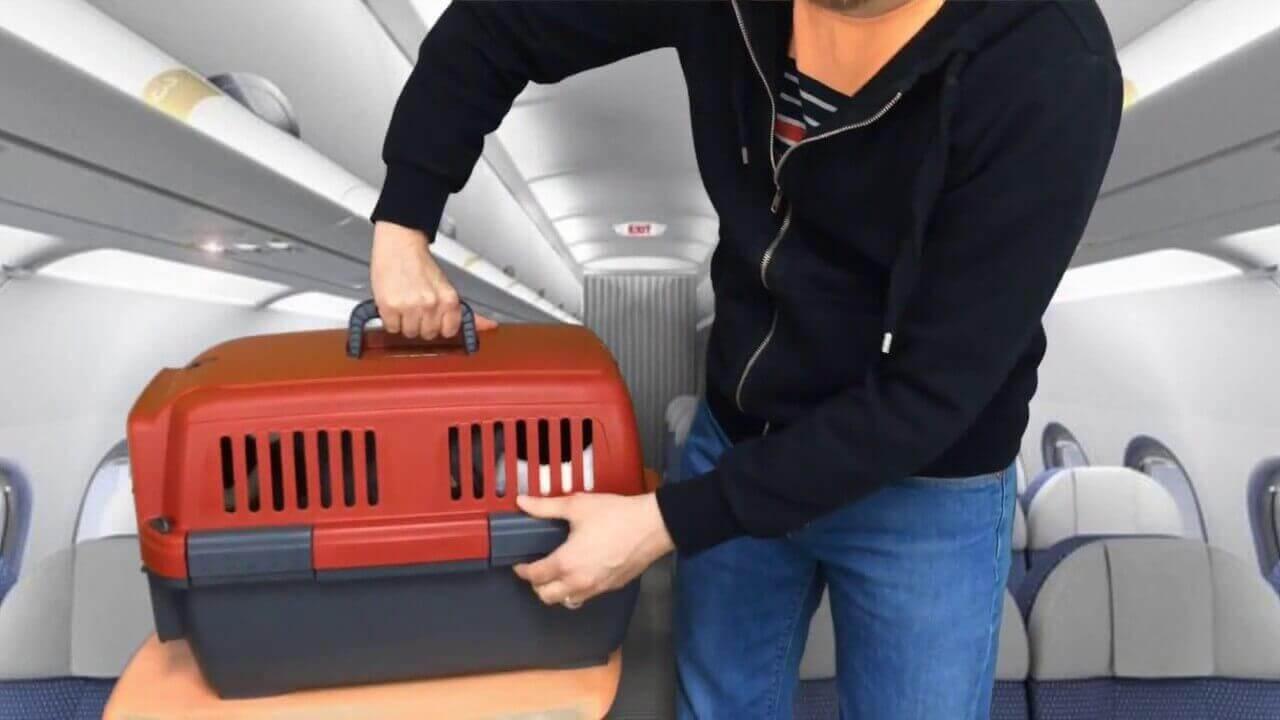 Перевозка кошки в самолёте: как правильно транспортировать питомца