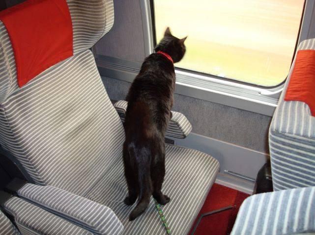 Как правильно перевозить собаку в поезде ржд в 2020 году